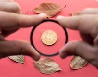 Éléments de conception pour l'automne La personne tient un verre dans des ses mains et regarder par lui Bitcoin d'or et feuilles  Image libre de droits