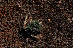 Éléments de la terre Photos stock