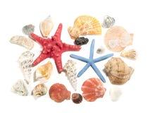 Éléments de la vie marine Photos stock
