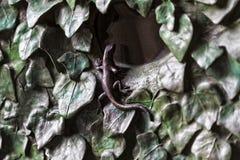 Éléments des insectes, fleurs, oiseaux des mammifères sur la vieille porte d'entrée au temple de la famille sainte Image stock