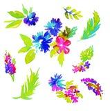 Éléments floraux d'aquarelle illustration de vecteur