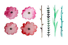 Éléments floraux d'aquarelle Image libre de droits