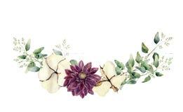 Éléments floraux d'aquarelle d'isolement sur le fond blanc L'ensemble de style de vintage avec l'eucalyptus endeed s'embranche et Photos stock