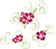 Éléments floraux de ketmie Photo stock