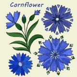 Éléments stylisés et brodés, fleur de bleuet Vecteur illustration stock