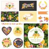 Éléments tropicaux de conception de thème de fête de naissance Photos stock