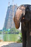 Éléphant à une ville occupée Photo stock