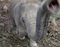 Éléphant, éléphant de chéri Images stock