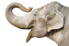 Éléphant Image libre de droits