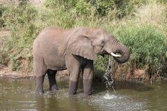 Éléphant Photo libre de droits