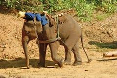 Éléphant 4 Photographie stock libre de droits