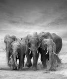 Éléphant Photos stock