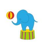 Éléphant adroit de bande dessinée de cirque sur le podium avec la boule Photographie stock