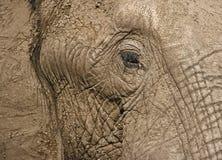 Éléphant africain Images stock