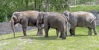 Éléphant africain Image libre de droits