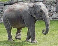 Éléphant africain 12 Images libres de droits