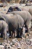 Éléphant africain de bébé avec le tronc dans le ciel Image stock