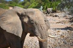 Éléphant africain en Namibie image stock
