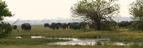 Éléphant africain Safari Scene Image stock