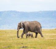 Éléphant africain sauvage et lui veau du ` s Photo libre de droits