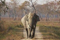 Éléphant asiatique énorme de Bull chez Kaziranga Photographie stock libre de droits