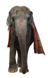 Éléphant asiatique d'isolement Image libre de droits