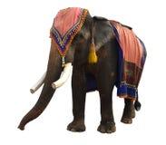 Éléphant asiatique d'isolement Images stock