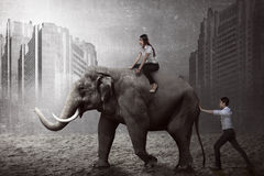Éléphant asiatique de poussée d'homme d'affaires Photo stock