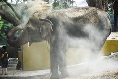 Éléphant asiatique en Thaïlande, versée avec le sable pour protéger des agains images libres de droits