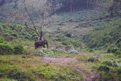 Éléphant asiatique errant dans son habitat Images libres de droits