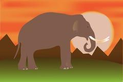 Éléphant au coucher du soleil Images libres de droits