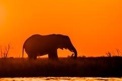 Éléphant au coucher du soleil Photos stock