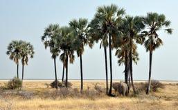 Éléphant au point d'eau entre les palmiers Photos libres de droits