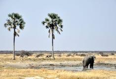 Éléphant au point d'eau entre les palmiers Images libres de droits