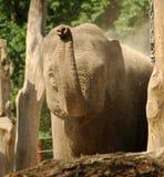 Éléphant au soleil Photographie stock