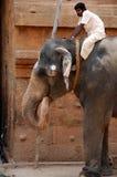 Éléphant au temple de Brihadeshwara, Inde photos libres de droits