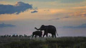 Éléphant avec la chéri Photographie stock