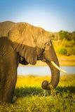 Éléphant avec la marque d'eau Photos libres de droits