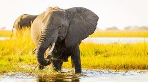 Éléphant avec le jet d'eau photos stock