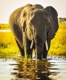 Éléphant avec le jet d'eau Image stock