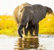 Éléphant avec le jet d'eau photographie stock libre de droits