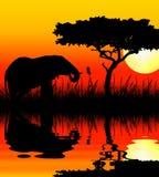 Éléphant buvant dans le coucher du soleil illustration de vecteur