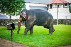 Éléphant chez Sri Dalada Maligawa Sri Lanka Photo libre de droits