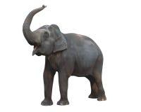 Éléphant, clip-pathed Photos libres de droits