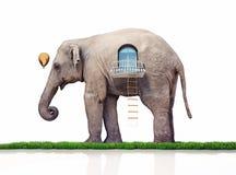 Éléphant comme maison illustration stock