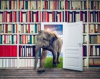 Éléphant contre des étagères à livres dans la bibliothèque images stock