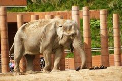 Éléphant Copenhague de zoo Image libre de droits