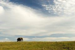 Éléphant, cordon et ciel Image stock