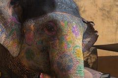 Éléphant décoré chez Amber Fort, état du Ràjasthàn de l'Inde Photo stock