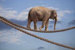 Éléphant d'acrobate en ciel marchant sur la corde images libres de droits